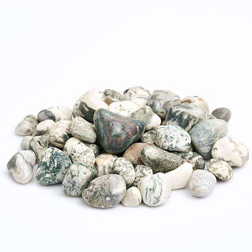 Zebra Pebbles (Mix Color, Medium) - 1 kg - Nurserylive