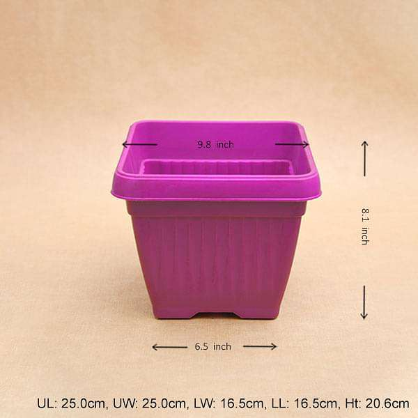 10 inch (25 cm) Bello Square Plastic Pot (Dark Pink) (set of 3) - Nurserylive