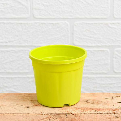 10 inch (25 cm) Grower Round Plastic Pot (Lime Yellow) (set of 3) - Nurserylive