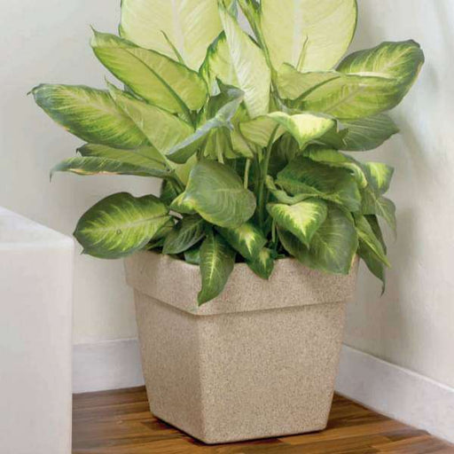 13.8 inch Barca No. 35 Stone Finish Square Rotomoulded Plastic Planter With Wheels (Sand Color) - Nurserylive