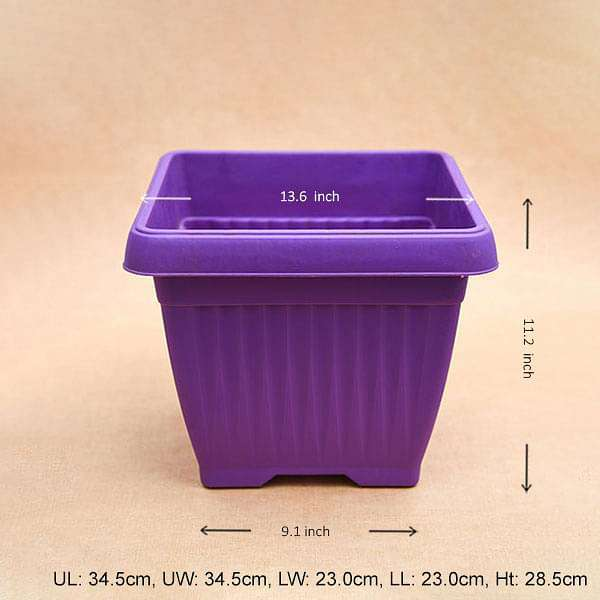 14 inch (36 cm) Bello Square Plastic Pot (Violet) (set of 3) - Nurserylive