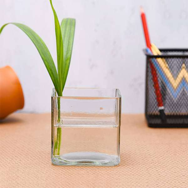 2.5 inch (6 cm) Square Glass Vase - Nurserylive