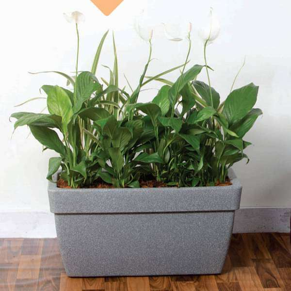 23.6 inch (60 cm) Barca No. 60 Stone Finish Rectangle Rotomoulded Plastic Planter With Wheels (Grey) - Nurserylive