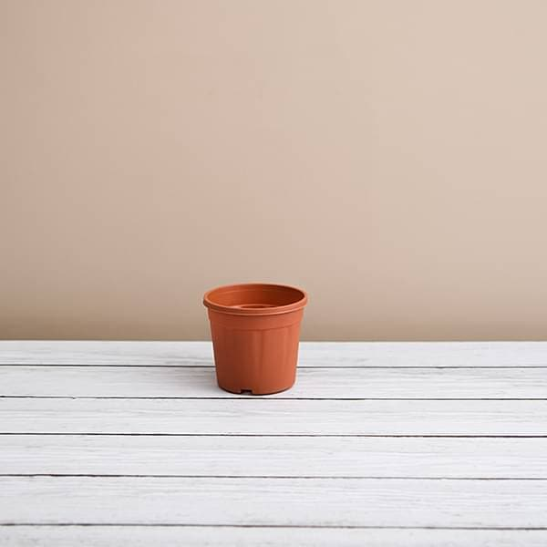 3 inch (8 cm) Grower Round Plastic Pot (Terracotta Color) (set of 6) - Nurserylive