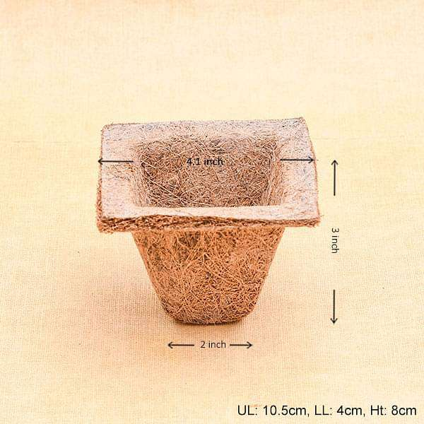 4.1 inch (10.5 cm) Coco Spanish Square Cup (Brown) (set of 6) - Nurserylive