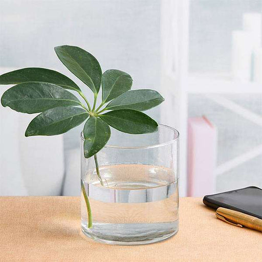 4 inch (10 cm) Cylindrical Glass Vase - Nurserylive