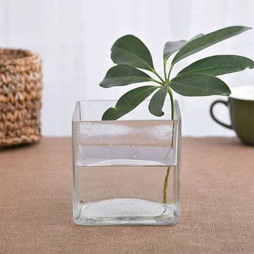 4 Inch (10 cm) Square Glass Vase - Nurserylive