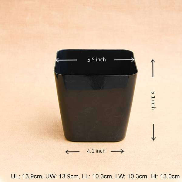 5.5 inch (14 cm) Square Plastic Planter with Rounded Edges (Black) (set of 6) - Nurserylive