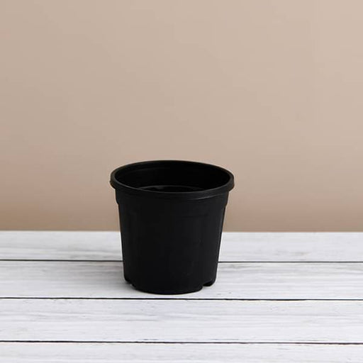 6 inch (15 cm) Grower Round Plastic Pot (Black) (set of 6) - Nurserylive