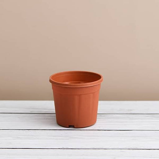 6 inch (15 cm) Grower Round Plastic Pot (Terracotta Color) (set of 6) - Nurserylive