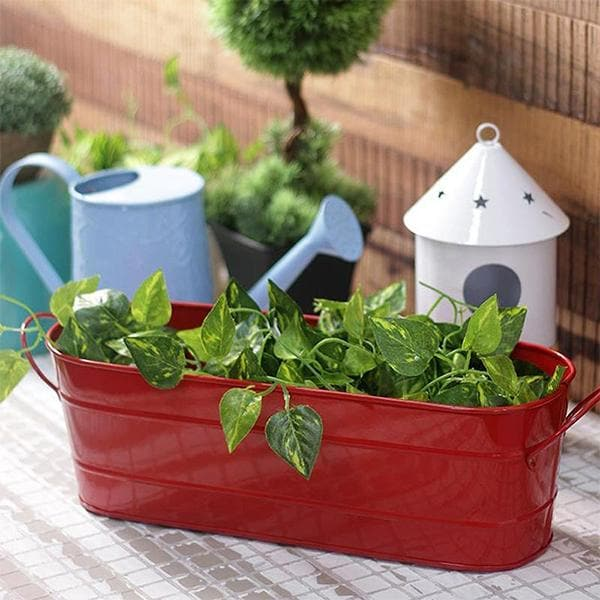 8 inch (20 cm) Small Oval Metal Planter (Red) - Nurserylive
