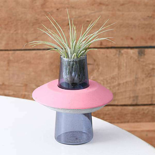 Bound By Love - Air Plant - Nurserylive