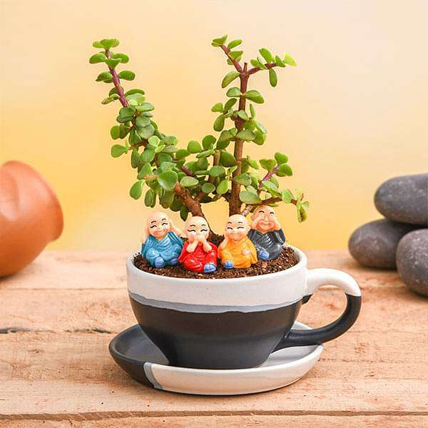 Cute Monks with Jade Plant in Ceramic Pot - Nurserylive