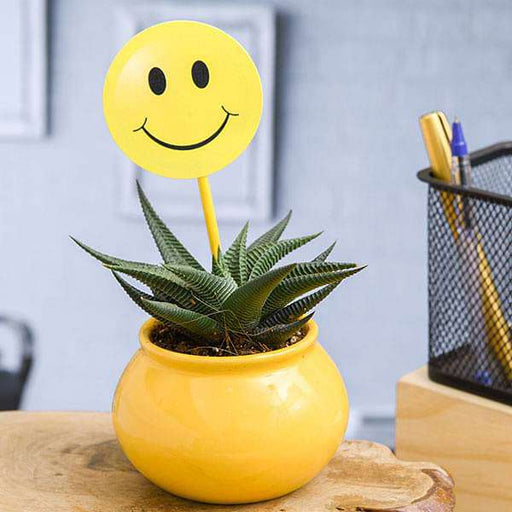 Haworthia Plant in Ceramic Handi with Smiley Flag - Nurserylive