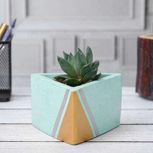 Haworthia truncata in Triangle Concrete Pot - Nurserylive