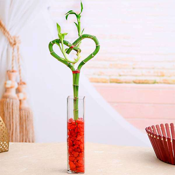 Heart Arrangement Lucky Bamboo in a Glass Vase with Pebbles - Nurserylive