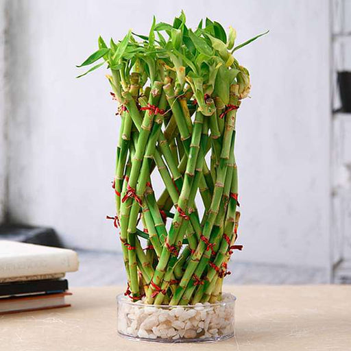 Pineapple Basket Lucky Bamboo in a Bowl with Pebbles - Nurserylive