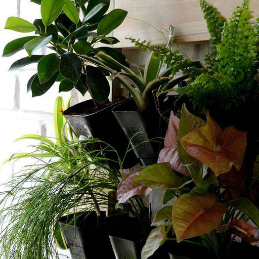Plants with vertical garden setup (2 X 2 ft) - Nurserylive