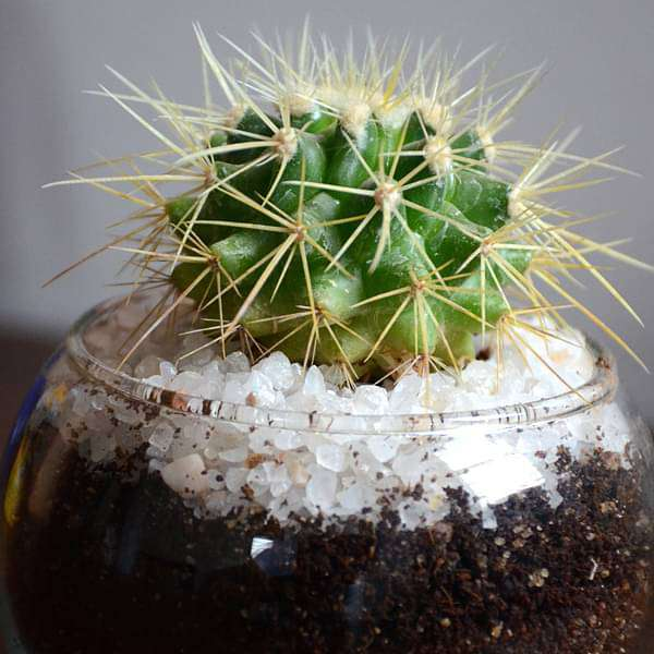 Small cactus spherical bowl (3in Ht)