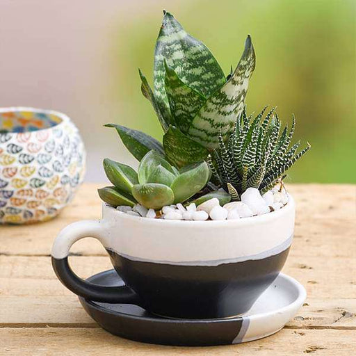 Succulent Garden in Ceramic Pot - Nurserylive
