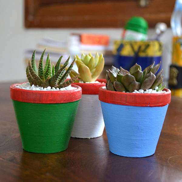 Succulent triplets in colorful pots (2.5in Ht) - Nurserylive