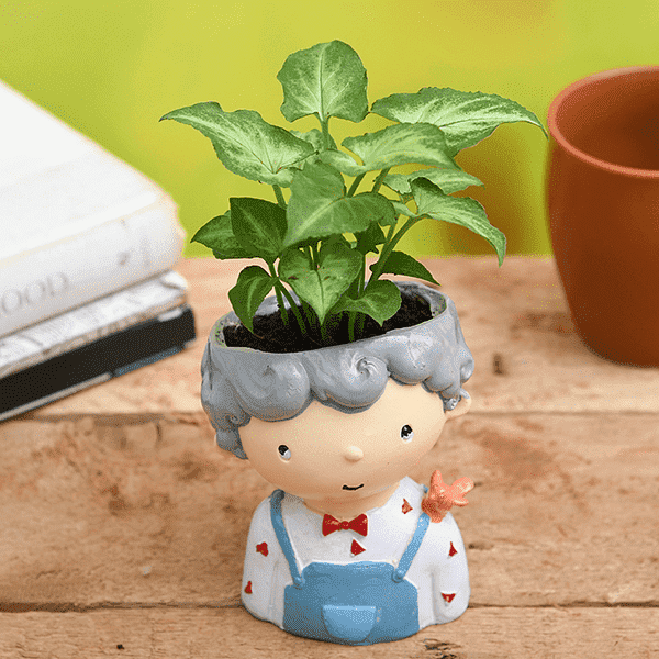 Syngonium Plant in Cute Boy Raisin Pot - Nurserylive