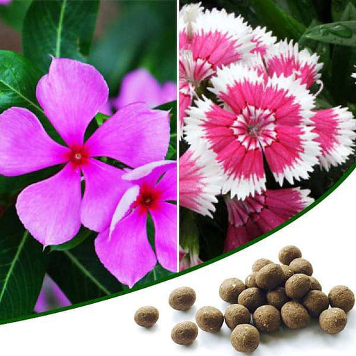 Beautiful Flower Gardening - 100 Seed Balls - Nurserylive