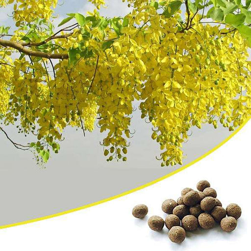 Easy to Grow Native Trees - 500 Seed balls - Nurserylive