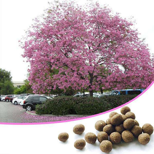 Just Throw and Grow Tree Seed balls - 100 Seed balls - Nurserylive
