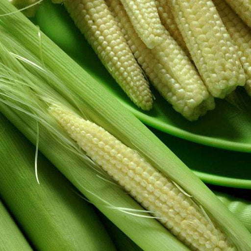 Baby Corn F1 Hybrid - Vegetable Seeds - Nurserylive