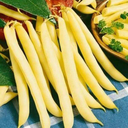 Beans Yellow Dwarf Bergold - Vegetable Seeds - Nurserylive