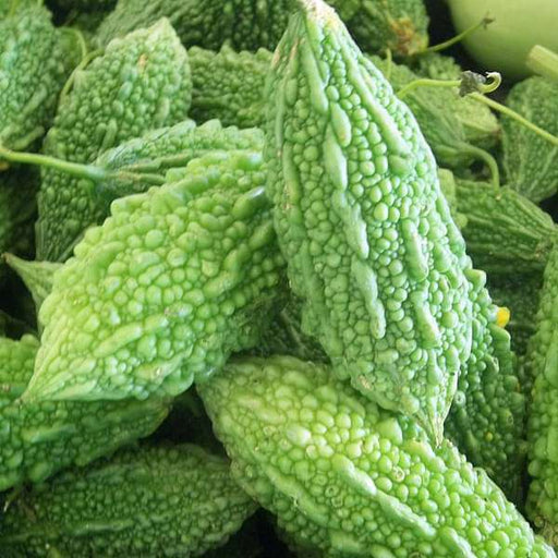 Bitter Gourd Faizabadi - Desi Vegetable Seeds - Nurserylive