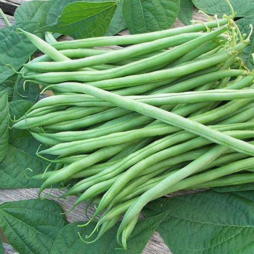 Bush Beans - Desi Vegetable Seeds - Nurserylive