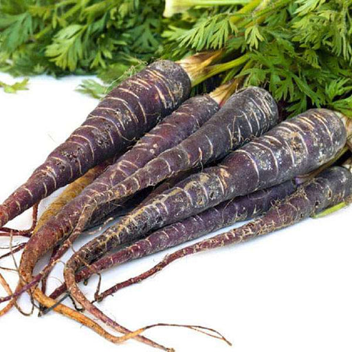 Carrot Black Wonder - Vegetable Seeds - Nurserylive