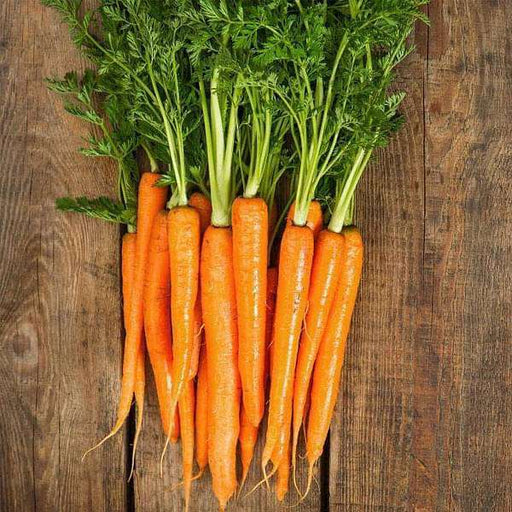 Carrot Early Nantes Imported - Vegetable Seeds - Nurserylive
