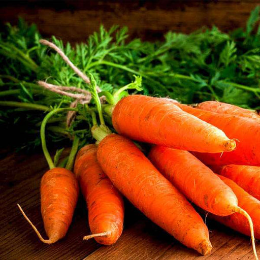 Carrot Early Nantus - Desi Vegetable Seeds - Nurserylive
