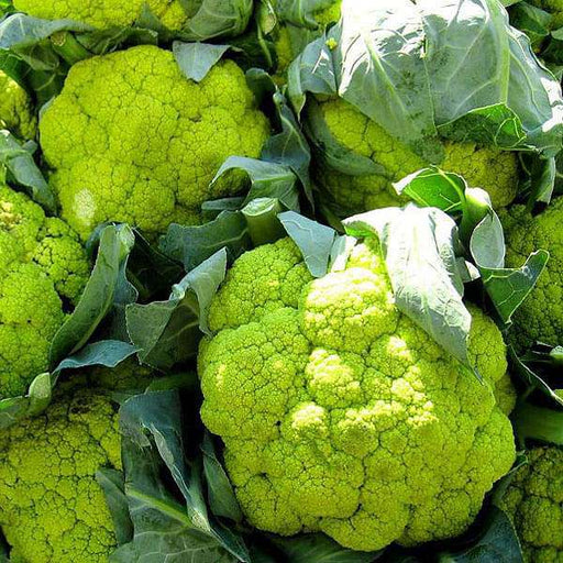 Cauliflower Green Verde - Vegetable Seeds - Nurserylive