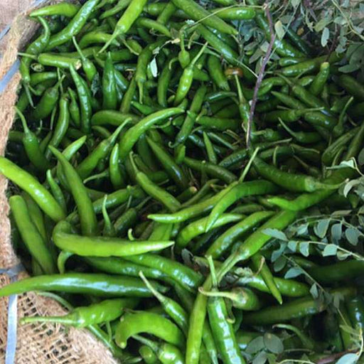 Chilli G 4 - Desi Vegetable Seeds - Nurserylive