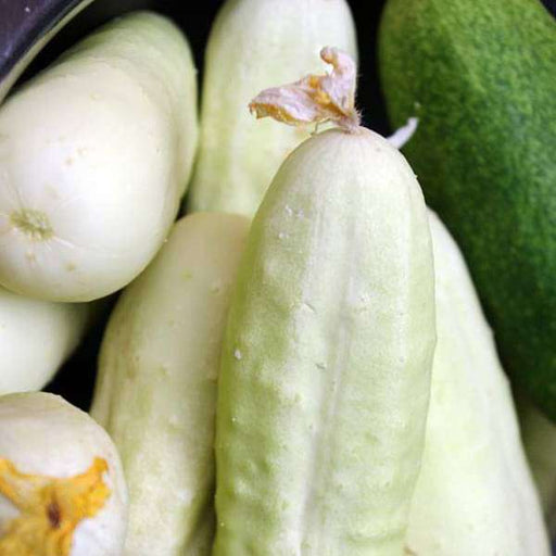 Cucumber F1 White Long - Vegetable Seeds - Nurserylive