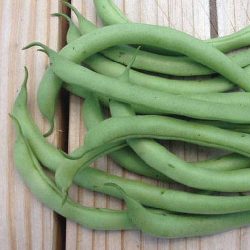France Beans Containder - Desi Vegetable Seeds - Nurserylive