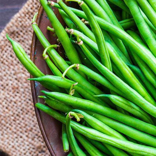 France Beans OS Imported Black, French Beans Black - Vegetable Seeds - Nurserylive