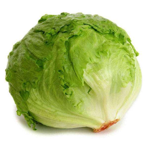 Lettuce Ice Berg Salista - Vegetable Seeds - Nurserylive