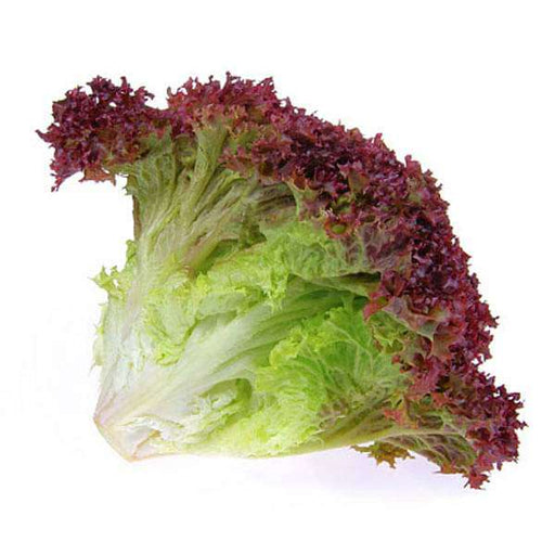 Lettuce Lollo Rossa - Vegetable Seeds - Nurserylive