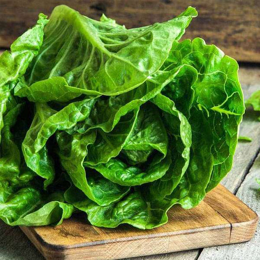 Lettuce Romaine Imported - Vegetable Seeds - Nurserylive