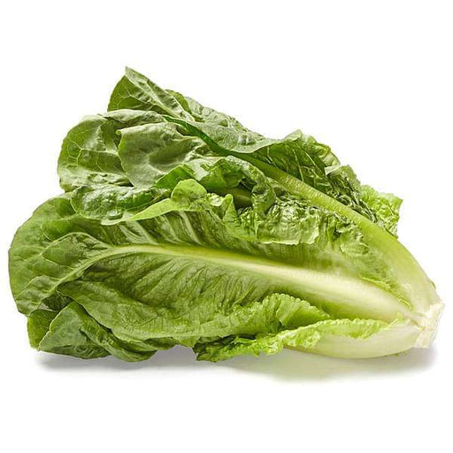 Lettuce Salad Crisp Head Great Lakes Green - Desi Vegetable Seeds - Nurserylive