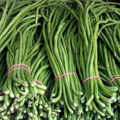 Lobia Beans - Desi Vegetable Seeds - Nurserylive