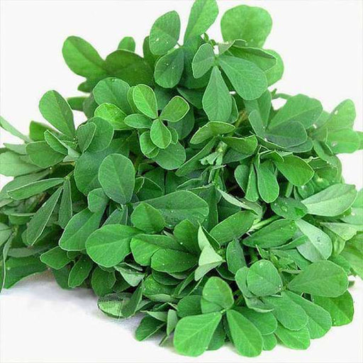 Methi Shalimar Improved - Organic Vegetable Seeds - Nurserylive