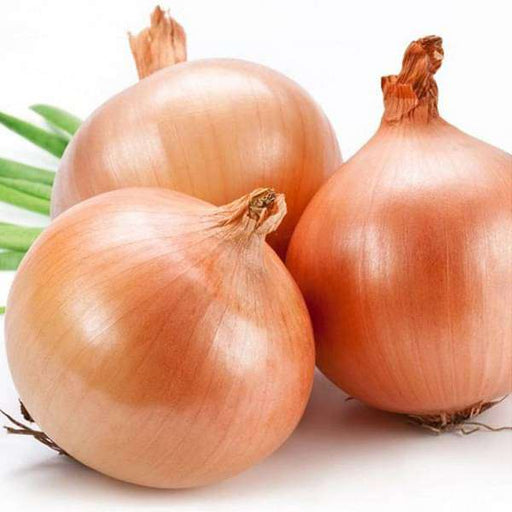 Onion Gawran - Desi Vegetable Seeds - Nurserylive