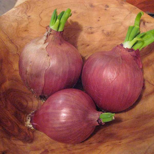 Onion Light Red - Desi Vegetable Seeds - Nurserylive