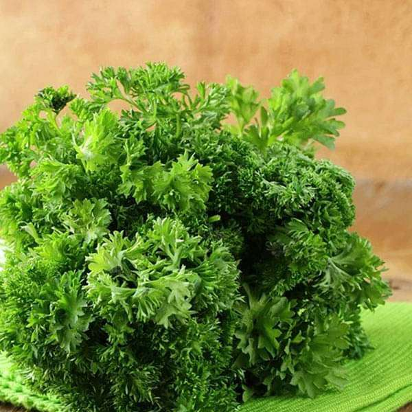 Parsley Moss Curled - Herb Seeds